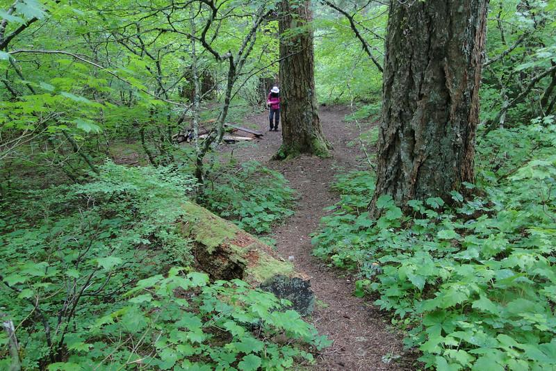 Gorton Creek Trail<br /> Deadwood Camp.