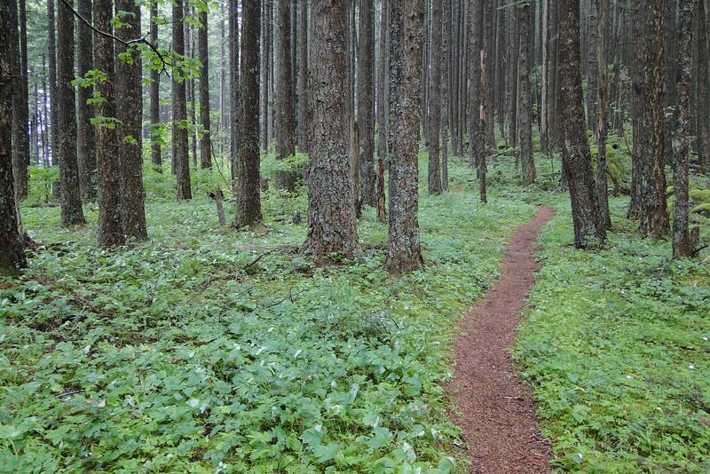 Indian Point Cutoff Trail.