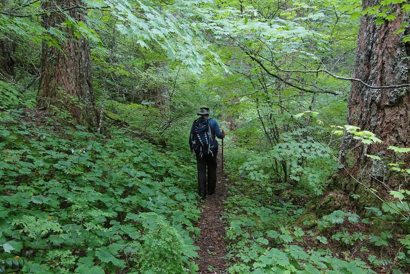 Gorton Creek Trail