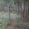 Green Point Ridge Trail