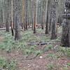 Green Point Ridge (#418) - Plateau Cutoff Trail (#412) Junction