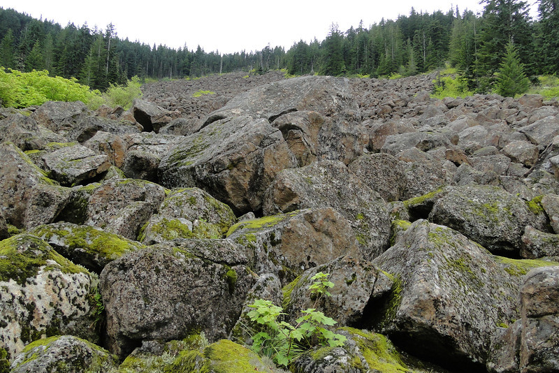 Gorton Creek Trail<br /> The Giant Rockfield.