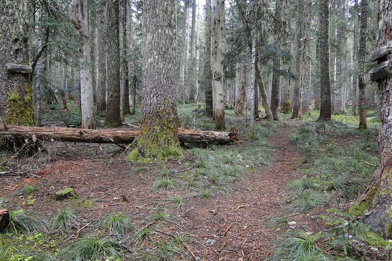 Gorton Creek (#408) Plateau Cutoff (#412) Junction.