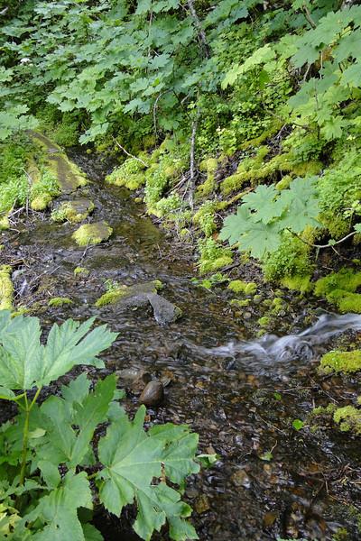 Wyeth Trail