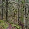 Trail to Perham Creek.