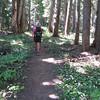 Vista Ridge Trail <FONT SIZE=1>© Chiyoko Meacham</FONT>