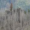Bluegrass Fire.<br /> 2006.