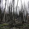 Entering the 2006 Bluegrass Fire burn area on Bluegrass Ridge.