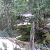 We took the spur trail to Still Creek Falls then I had to cross Still Creek again in order to get a photo!