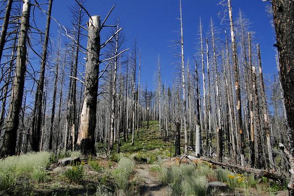 Polallie Creek Trail.