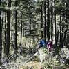 Cool Creek Trail