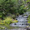 Elk Cove Trail