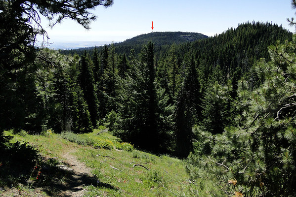 Lookout tower from the Pinnacles.