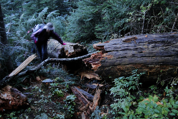 A new obstruction on the top Spur Trail!