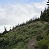 "<A HREF=""http://guy.smugmug.com/Outdoors-Hikes-Climbs-etc/Mt-Hood-Hikes/Mc-Neil-Ridge-July-2009/8804624_rGooP#582969012_ss79m"" TARGET=""_blank"">Last year</A> this areas was covered in flowering Beargrass, this year it was a bust!"