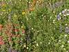 08 Paradise Park Flowers