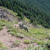 Looking down on the Timberline Trail below the Bald Mountain Summit.