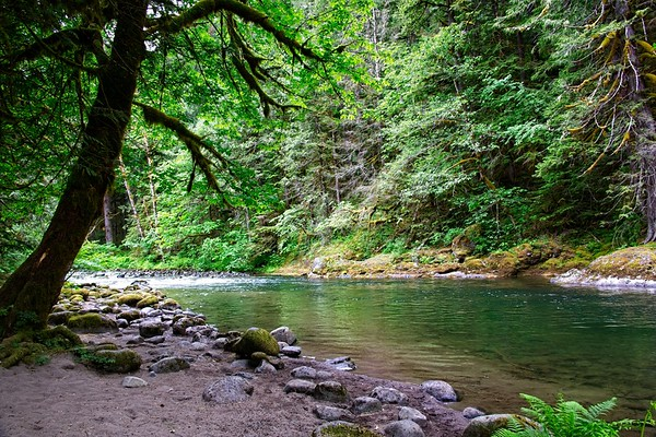 The old salmon river trail