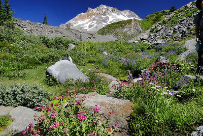 Back on the Timberline Trail.
