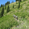 Timberline Trail. <FONT SIZE=1>© Chiyoko Meacham</FONT>