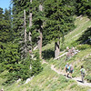 Timberline Trail. FONT SIZE=1>© Chiyoko Meacham</FONT>