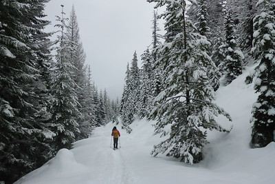 Pocket Creek - 2017/02/19