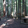 Camp III - about a mile from the road complete with table, windbreak, tree shelves & a firewood store area.