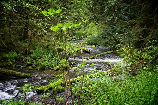 Still Creek Loop - Camp Creek