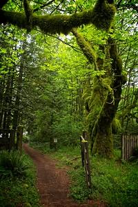 Still Creek Loop - Tollgate Maple