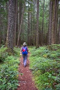 Still Creek Loop - Still Creek Trail