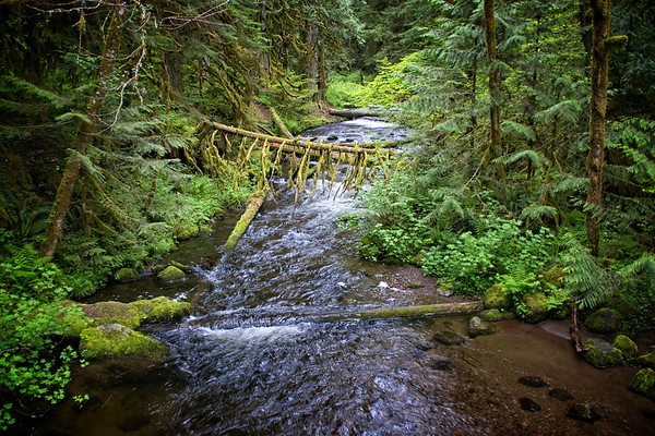 A still Creek Loop in the rain.