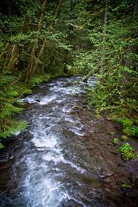 Still Creek Loop - Zigzag River