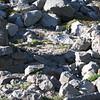 The Gnarl Ridge Stone shelter ruins.