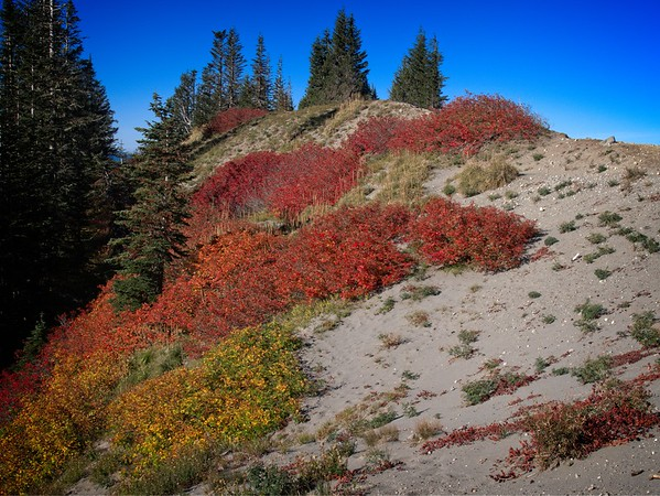 Timberline to Paradise Park & back