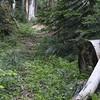 Abandoned trail segment?