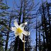 Vista Ridge Trail. <I>Life & Death</I>