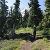 Vista Ridge Trail.