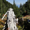 Mt. Adams from Elk Cove