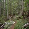 Cast Creek Trail.