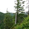 Elk Mountain summit movie.