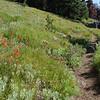 Trail to Strawberry Mountain