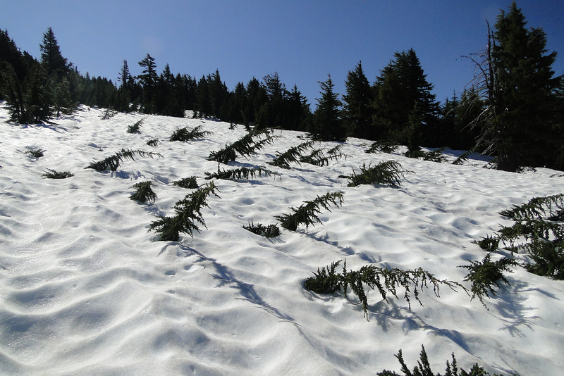 Tipsoo Meadows
