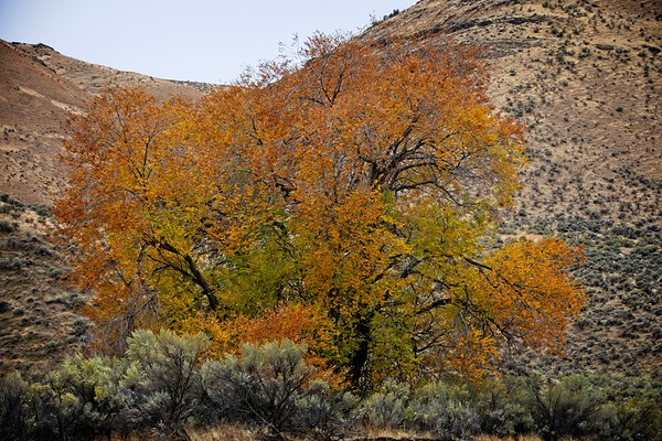 Cotton Wood Canyon