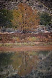 Cotton Wood Canyon
