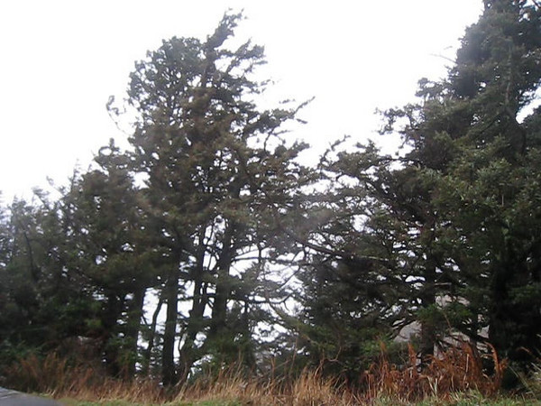 We arrived at Cannon Beach just before high tide & headed up to Ecola state park. The wind & rain were howling!