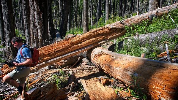 Elk Lake Creek - Bull of the Woods