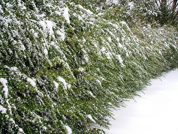 February Snowpocalypse 2021