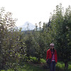 Kiyokawa Orchards with Mt. Hood in the background.