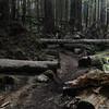 North Neahkahnie Mountain Trail