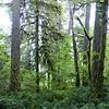 Lower Woodland Trail.
